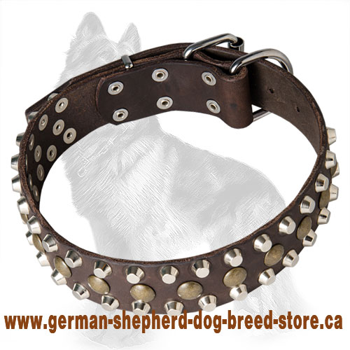 Leather German Shepherd Collar with Brass Studs and Nickel Pyramids