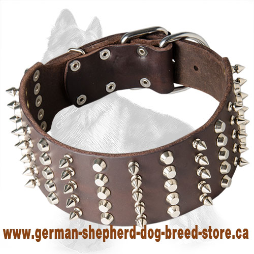 Wide Leather German Shepherd Collar with Nickel Spikes and Studs
