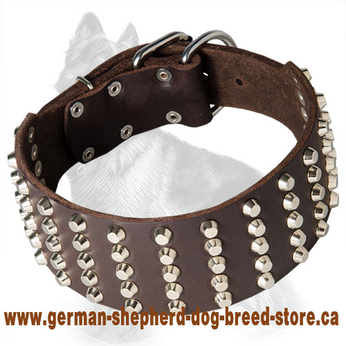 Wide Leather German Shepherd Collar with Nickel Plated Cones
