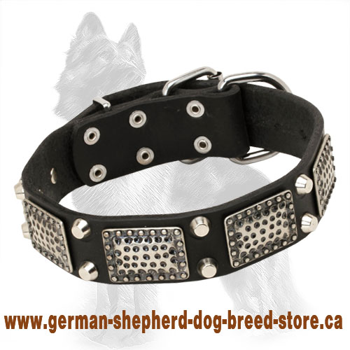 Leather German Shepherd Collar with Nickel Plates and Pyramids
