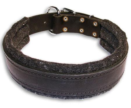Leather Padded Black collar 25'' for Alsatian Dog /25 inch dog collar-C24