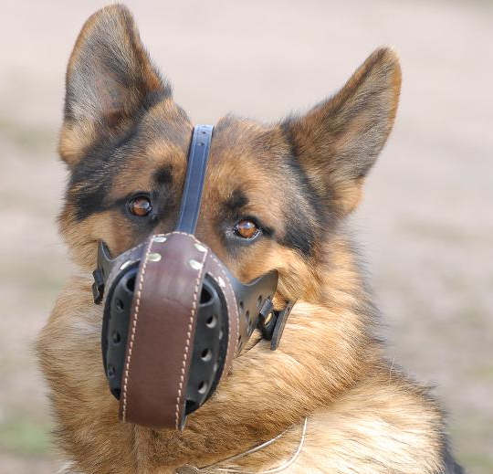 "K9 Leather dog muzzle ""Dondi""plus style For Police dogs"