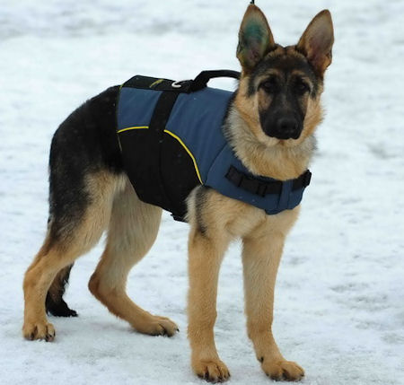 German Shepherd VEST- nylon dog harness for Shepherd,dog Coat for Shepherds