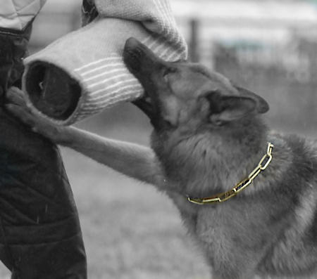 German Shepherd FUR SAVER DOG COLLAR Herm Sprenger