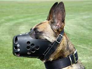 training leather dog muzzle  for gsd