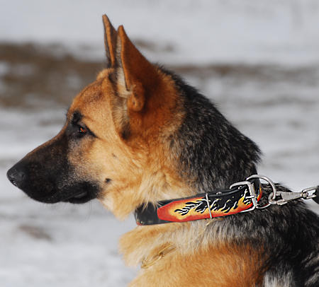GSD Leather dog collar  - Hand painted by our artists for German shepherd