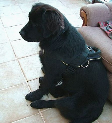nylon dog harness with handle for puppies- young dogs
