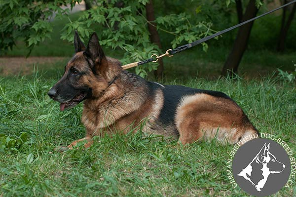 German-Shepherd leather leash of high quality with riveted hardware for daily activity
