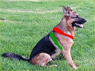 size dog harness gsd