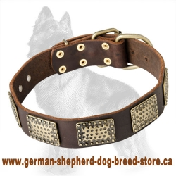German Shepherd Leather Dog Collar with Embossed Massive Brass Plates
