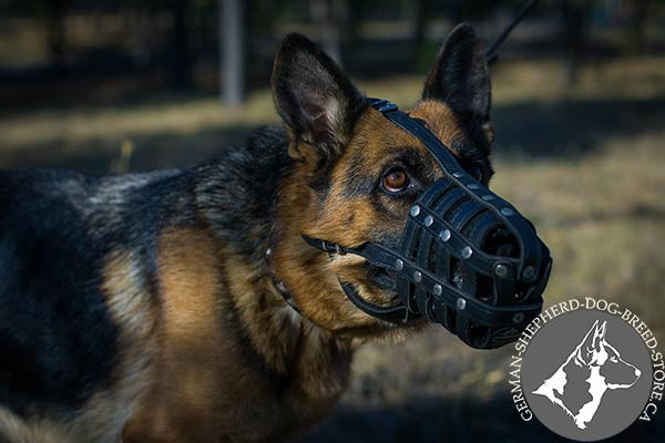 Leather Dog Muzzle  with Thick Felt Padding