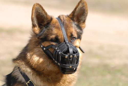 Ventilated German Shepherd Muzzle with Durable  Fittings