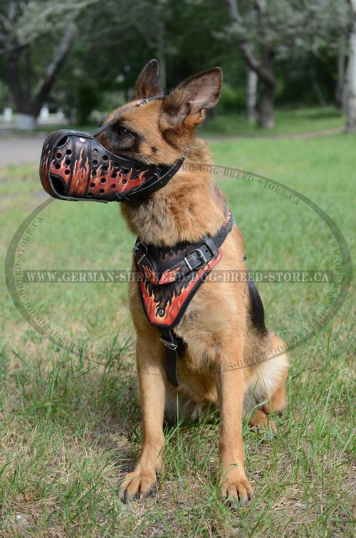 German Shepherd Dog Supplies Decorated with Safe Non-Toxic Paints