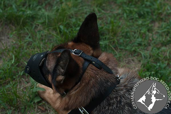 German Shepherd leather muzzle easy-to-adjust nickel plated fittings for daily activity