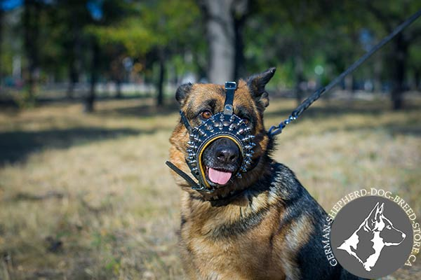 German Shepherd leather muzzle adjustable  with nickel plated fittings for stylish walks