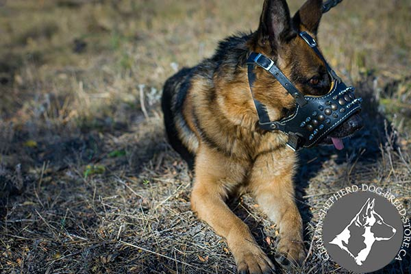 German Shepherd leather muzzle snugly fitted with handset decoration for basic training