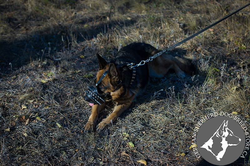 Royal Spiked Leather Dog Muzzle For German Shepherd M61