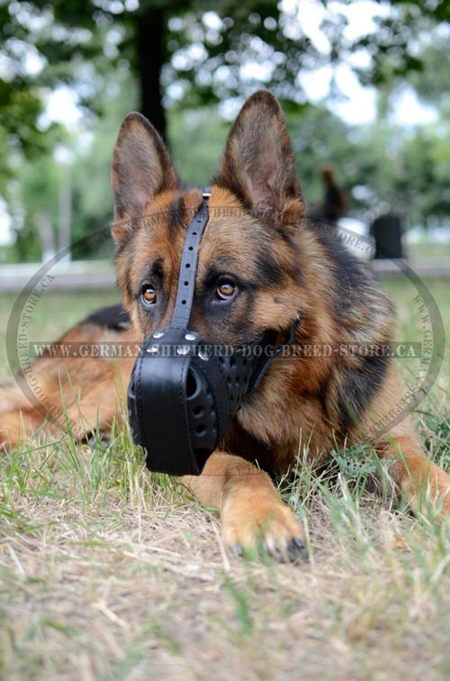 Leather German Shepherd Muzzle Strong for Training