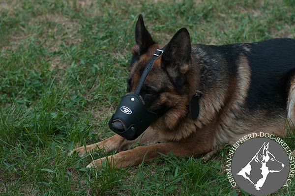 Stitched and Riveted Leather Dog Muzzle with Soft Padding