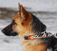 GSD Leather dog collar - Hand painted by our artists