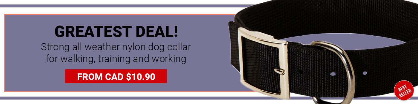 Nickel Plated Hardware Nylon Collar for German Shepherd