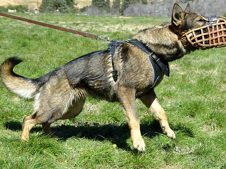Leather wire basket muzzle for German  shepherd/Malinois