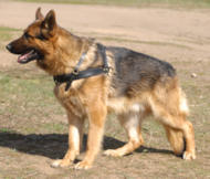 Walking Pulling/Tracking Leather Dog Harness For German shepherd
